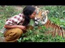 Unbelievable Friendship! People and Wild Animals - 2017
