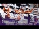 Тысячи кур заблокировали автобан в Австрии
