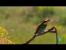 Grandes documentales - Los verdaderos Angry Birds