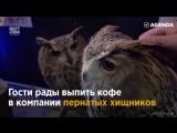 Антикафе и совы