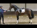 A very exciting 3 yr. old dressage youngster. Super horse with all the quality...