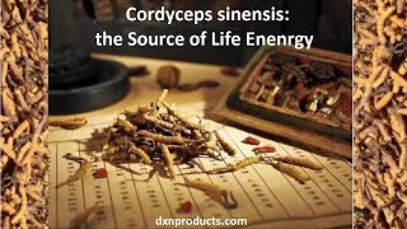 DXN Cordyceps liečivé huby zdroj životnej energie - Ayurveda prezentácia