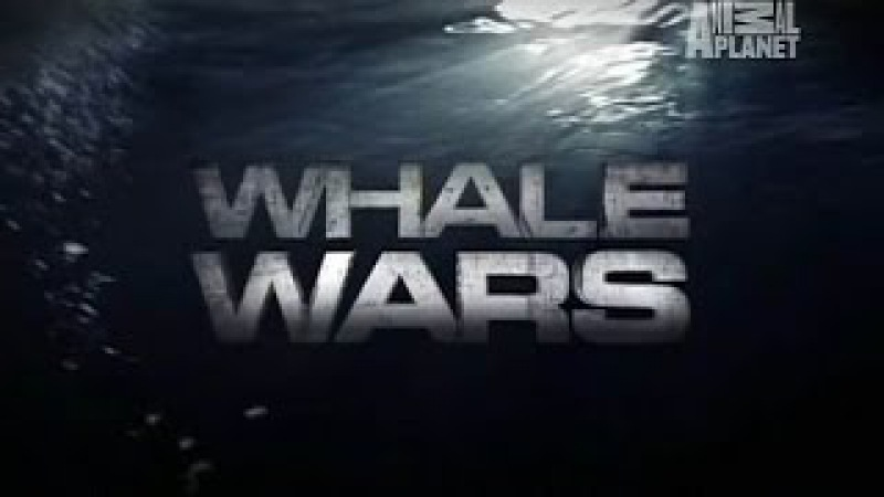 Whale Wars Special: Operation Bluefin