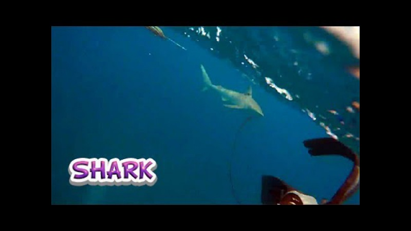 Нападение акулы попало на видео