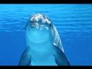 В Испании спасли дельфина