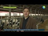 Ярославский фермер ради надоев катает коров на карусели - МИР24
