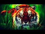 Документальный фильм - В поисках людоеда Тигр В мире животных Это интересно!