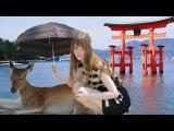 MIYAJIMA - Most beautiful island in Japan