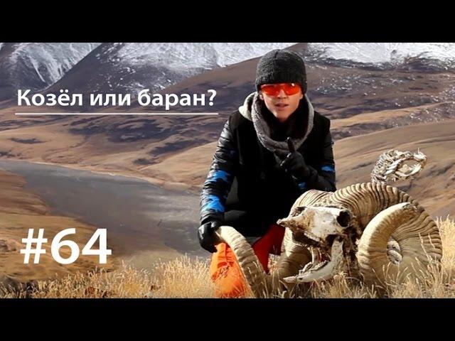 Козёл или баран Всё как у зверей 64