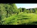 Косули на даче у друзей-Латвия