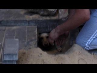 Спасение замурованной собаки по имени Белка /Rescue immured dog by name Belca/