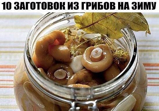 Соление грибов в домашних условиях холодным способом