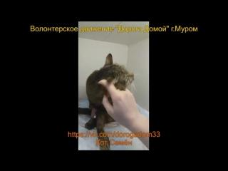 Кот Семён в вет клинике