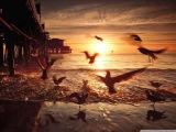 Offshore Wind &amp Roman Messer feat. Ange - Suanda (Aurosonic Progressive Remix)