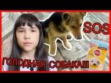 Кормлю ГОЛОДНУ собаку!!! SOS!!! Моя ИСТОРИЯ! Renara Karalek!