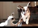 Кошки VS Cобак. Лучшие приколы с котами и собаками