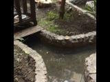 caesar_84 video