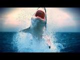 Документальный Фильм - Самое опасное животное