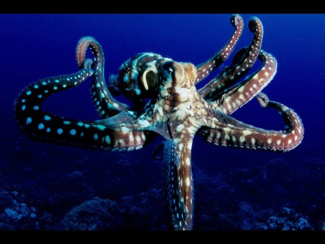 The Most Intelligent Animal on Earth | Unedited Movie - Aliens of the Deep Sea | Nature Documentary