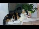 Для поднятия настроения Очень позитивное видео про кошек и собак