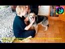 Счастливая собака из приюта знакомиться с новым домом и хозяевами | the dog was taken from