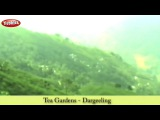 Tea Gardens in Dargeeling  East India Tourism in Hindi  Tourist Places to Visit