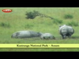 Kaziranga National Park in Assam  East India Tourism in Hindi  Tourist Places to Visit