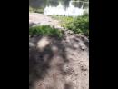 утки борьба за выживание