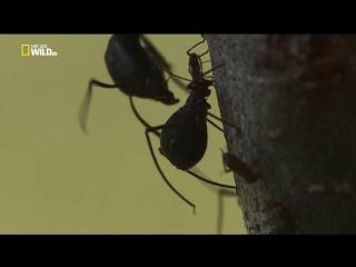National Geographic. Дикое меню 26 серия из 26 - Жизнь без отходов / Wild Menu (2014)
