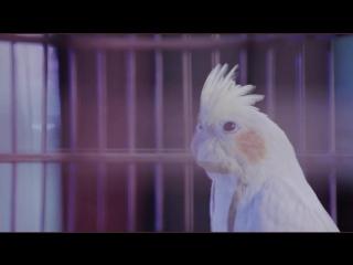 LuHan鹿晗_Winter Song(微白城市)_MV Making Film