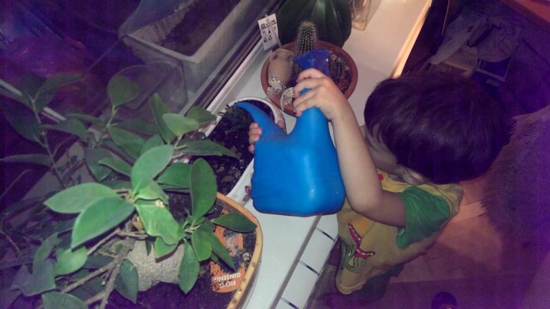 Niki arrose les cactus