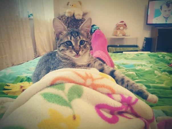 Вчера вечером упал с балкона котенок,зовут Вася. На одном глазу у него