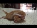 мама-кошка обнимает спящего котенка