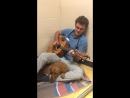 Ветеринар играет пациентам на гитаре!