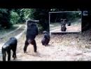 Дикие_животные_и_зеркалоPLAY_-_лучшее_видео152