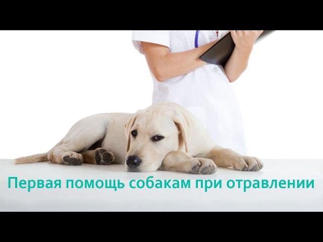 Первая помощь собаке при отравлении. Ветеринарная клиника Био-Вет