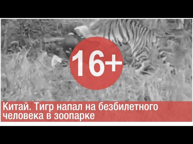 Китай. Тигр напал на безбилетного человека в зоопарке [СЖ]
