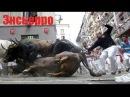 Видео самого безумного шоу энсьерро бег разъяренных быков в Испании