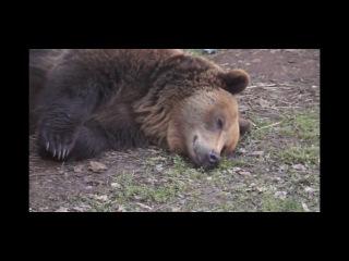Культ Медведя 2 (на русском) Bear Cult 2