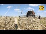 Аграрии приближаются к трём миллионам тонн зерна