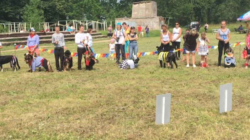 Город Торжок, Выставка собак 2016 год.