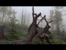 Дикая природа Германии. Боварский лес. 2011