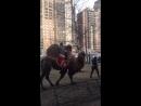 По улице слона водили...