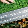 Витграсс в Москве Sweetgrass.ru