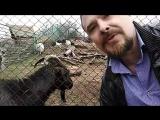 Прямой эфир из Большереченского зоопарка!