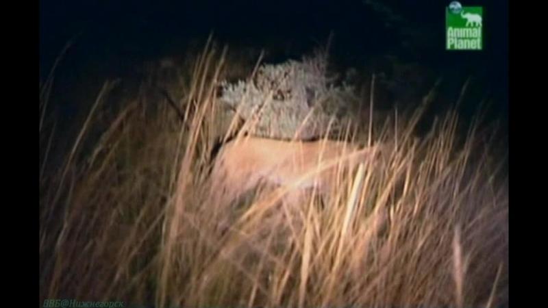 BBC «Заповедник в дебрях Африки» (05 серия) (Реальное ТВ, животные, 2005)