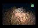 BBC Заповедник в дебрях Африки 05 серия Реальное ТВ животные 2005