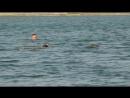 утки Ново-Пятигорское озеро