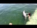 Плавает с дельфином