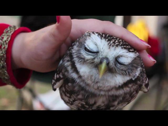 Antony and the owl
